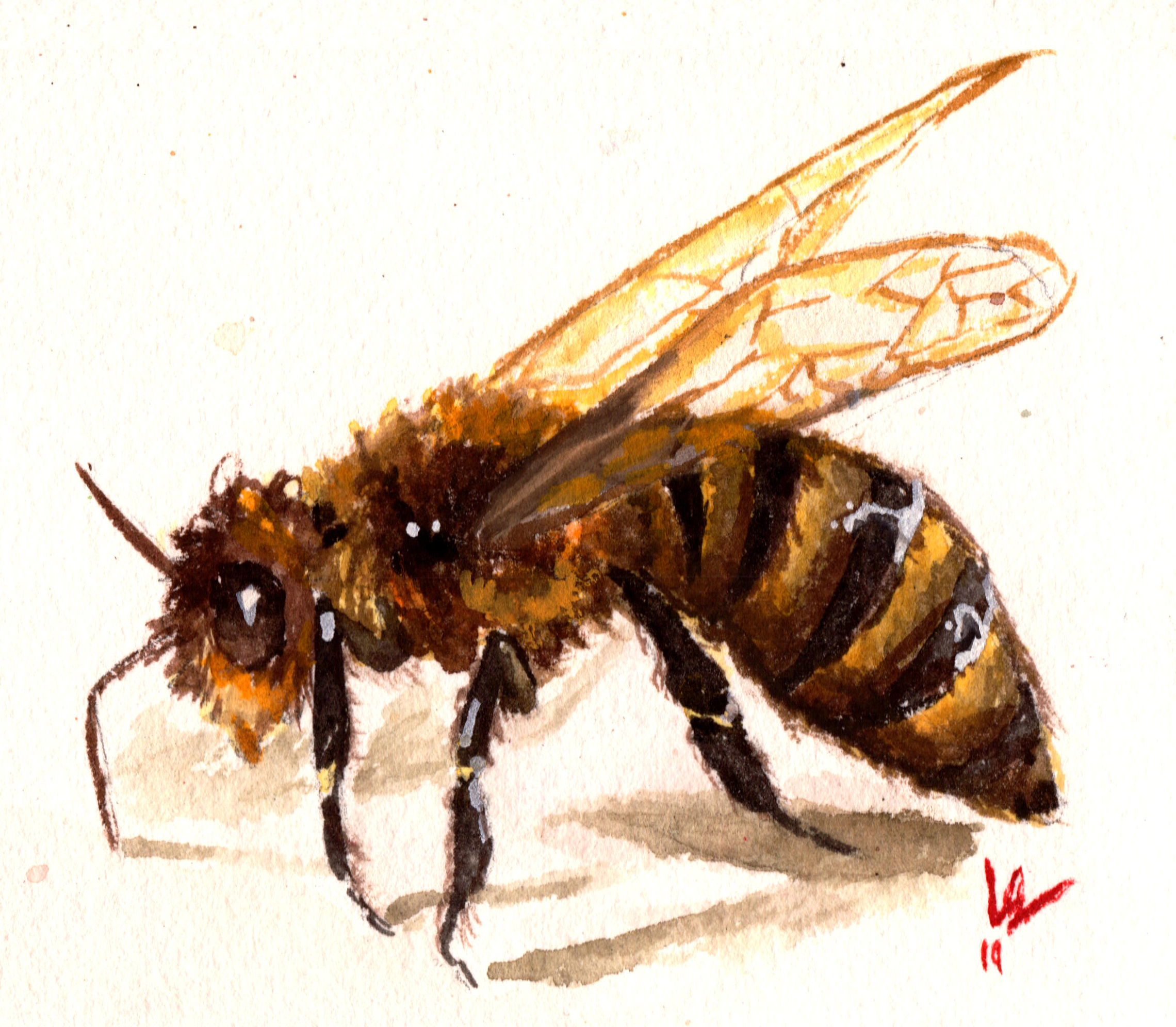 Gouache painting of a bee